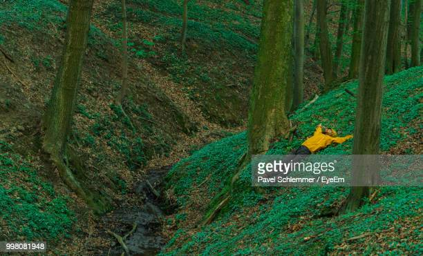 man lying down on field at forest - lying down stock-fotos und bilder