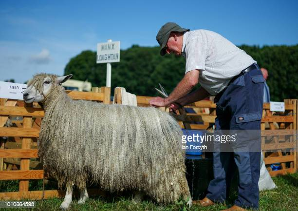 A man makes final preparations and trims one of his sheep during 152nd the Ryedale Country Show on July 31 2018 in Kirbymoorside England Held in...