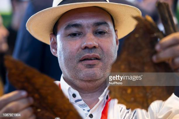 A man making a cigar at Dominican Republic stand at FITUR International Tourism Fair at Ifema 24 January 2019