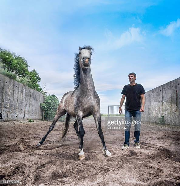 Man male and horse on paddock over sky background