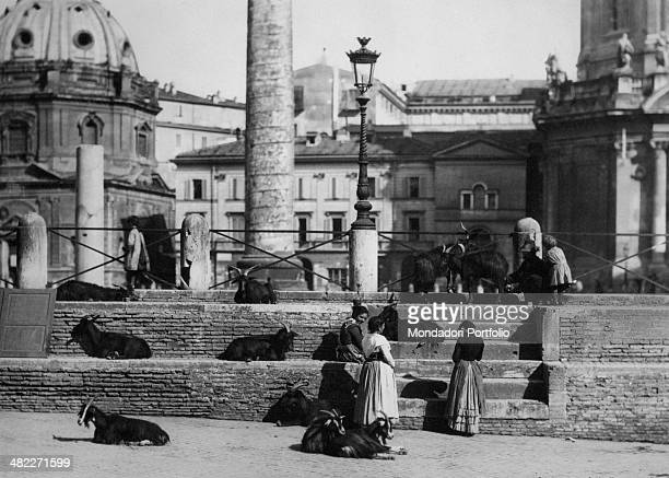 A man milking a goat nearby the Trajan's Column In the background the church of Santa Maria di Loreto and the church of Santissimo Nome di Maria Rome...