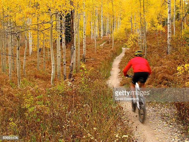 man mountain biking in fall season - steamboat springs colorado - fotografias e filmes do acervo