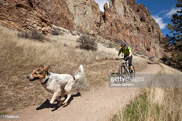 a man mountain biking with his dog. - bent stock pictures, royalty-free photos & images