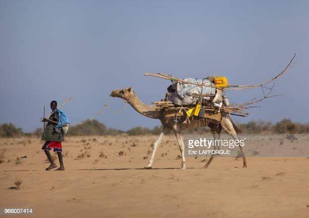 Man Moving Aqal Soomaali Somali hut On Back of Camel In Desert Somaliland