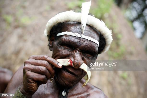 A man of the traditional Dani tribe from Lembah Baliem wears a nose piercing made from boar tusk on October 10 2009 in Wamena West Papua Indonesia...