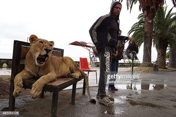 A man offers to tourists to take a paid photo with his pet lion on the seafront of the Black Sea on October 9 2015 in Gagra Abkhazia Abkhazia is a...