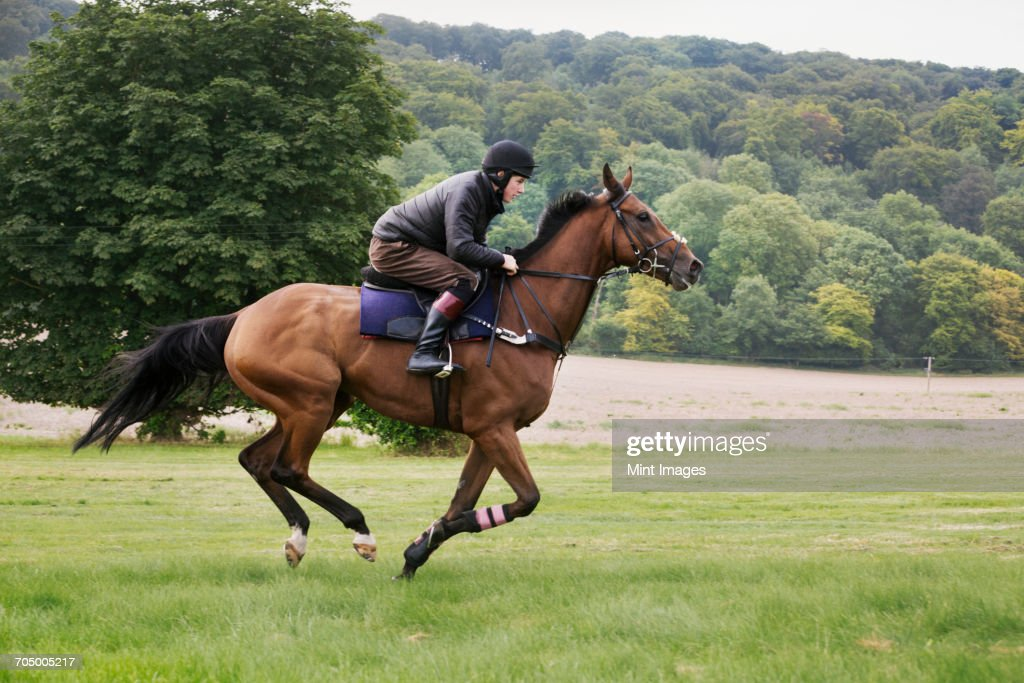 Man on a bay horse galloping across grass. : Stock Photo