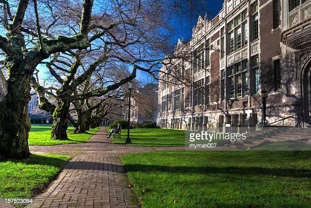 男性のベンチ - ワシントン大学 ストックフォトと画像
