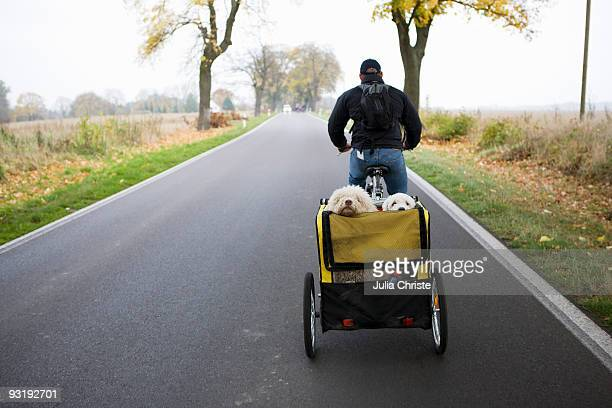A man on a bike pulling a trailer with two dogs