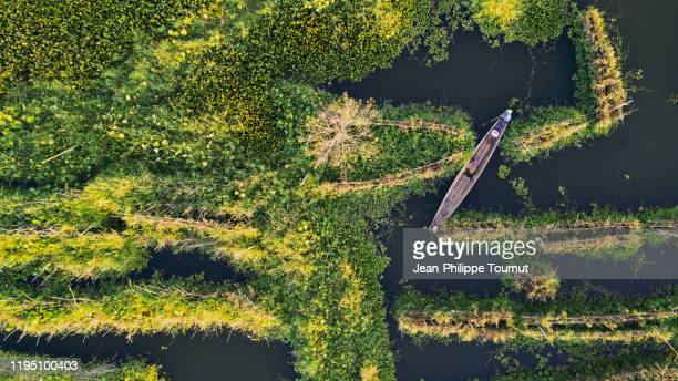man on a boat navigating in the floating garderns of inle lake, shan state, myanmar - asiatisches langboot stock-fotos und bilder
