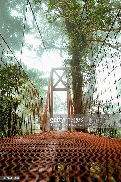 Man on a bridge, Monteverde Cloud Forest Reserve