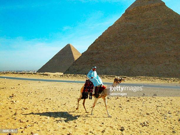 Man on a camel in front of the pyramids, Giza Pyramids, Giza, Cairo, Egypt