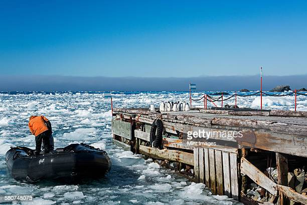 Man on a rubber boat near a jetty on the frozen ocean at Esperanza Base. Adelie penguins on the jetty.