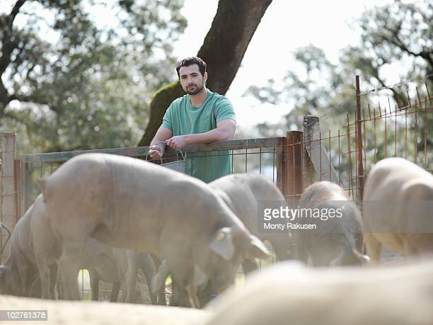 Man on farm feeding pigs
