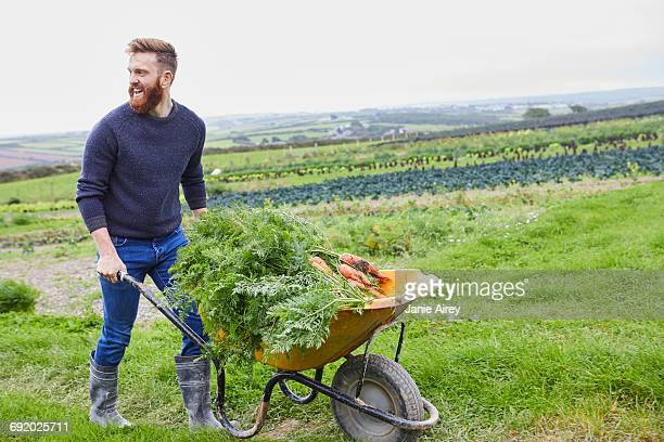 man on farm pushing wheelbarrow of carrots - wheelbarrow stock photos and pictures