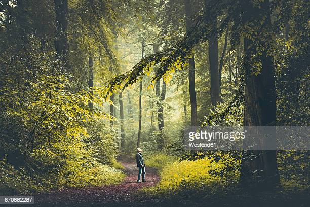 man on forest path - wald stock-fotos und bilder