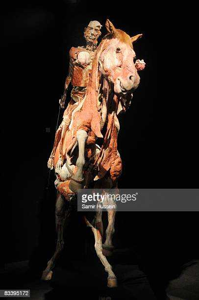 Man on horseback displayed at Gunther von Hagens' 'Body Worlds And The Mirror Of Time' exhibition at the O2 bubble on October 23, 2008 in London,...