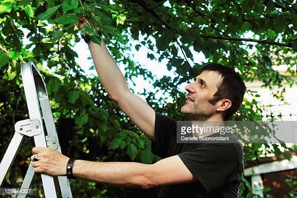 リモコラダー落とす木 - 四肢 ストックフォトと画像
