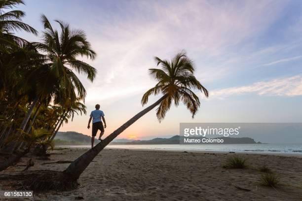 man on palm tree looking at sunrise, playa carrillo, costa rica - playa carrillo fotografías e imágenes de stock