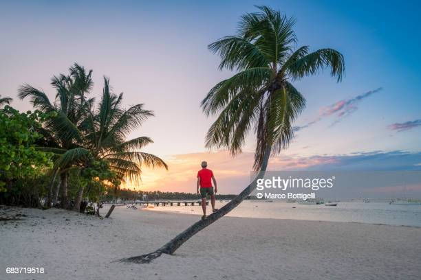 man on palm tree looking at sunset. punta cana, dominican republic. - paisajes de republica dominicana fotografías e imágenes de stock