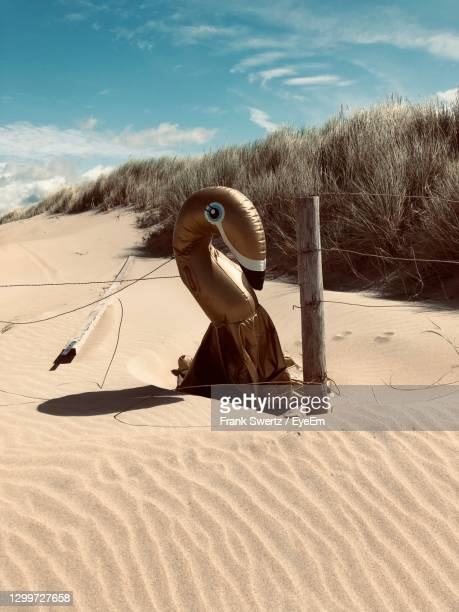 man on sand at beach against sky - frank swertz stock pictures, royalty-free photos & images