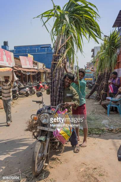 """man on scooter collecting sugar cane from market in preparation for thai pongal, pondycherry, india - india """"malcolm p chapman"""" or """"malcolm chapman"""" ストックフォトと画像"""