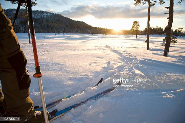 Man on skis in the low winter sun