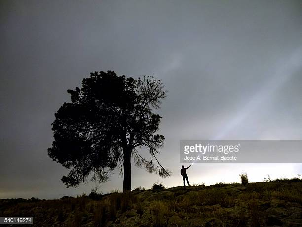 Man on the top of a mountain close to a great tree illuminating the sky with a lantern