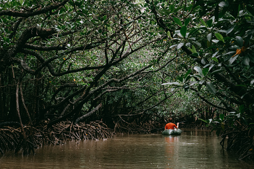 Man paddling kayak in mangrove swamp, Okinawa, Japan - gettyimageskorea