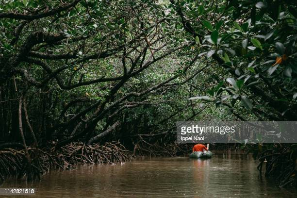 man paddling kayak in mangrove swamp, okinawa, japan - mangrove tree stock pictures, royalty-free photos & images