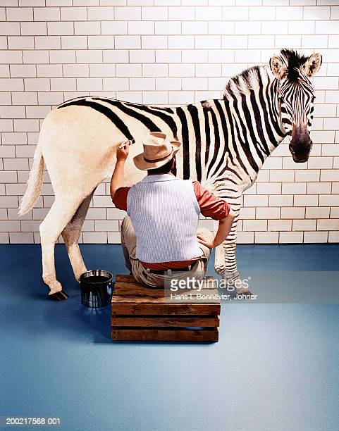 man painting horse with zebra stripes, indoors, rear view - zebra stock pictures, royalty-free photos & images