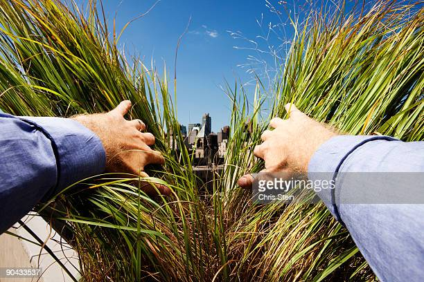 man parting green grass - finding stock photos and pictures
