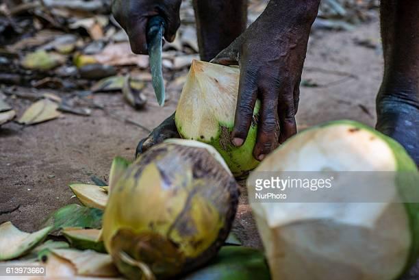 A man peels fresh coconuts in the farm near Zanzibar City Zanzibar Tanzania on 11 October 2016