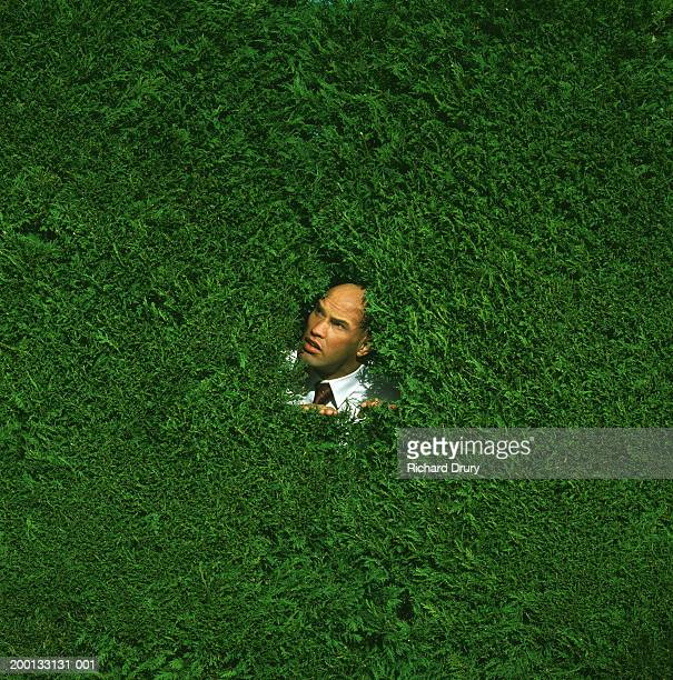 Man peering out from middle of box hedge