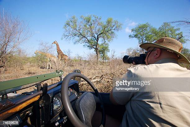 man photographing giraffe (giraffa camelopardalis) from 4x4 - limpopo province stock pictures, royalty-free photos & images