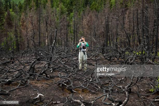 man photographs burned dead trees, kenai peninsula, alaska - kenai mountains stock pictures, royalty-free photos & images