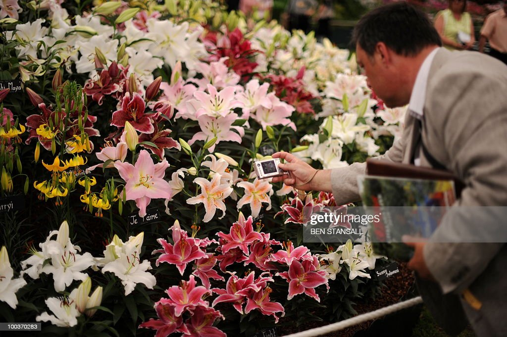 A man photographs flowers at the Chelsea Flower Show in London, on May 24, 2010. Garden designers have had to cope with unseasonal frosts up to a week before the event and possibly the warmest day of the year Monday.