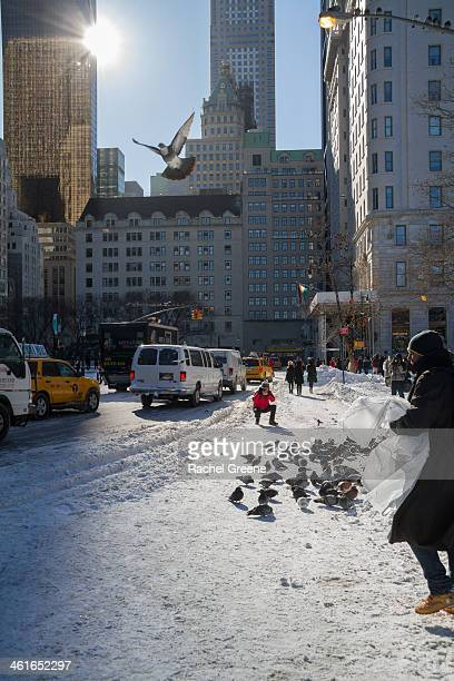 CONTENT] A man photographs pigeons in the snow near Central Park South after Winter Storm Hercules