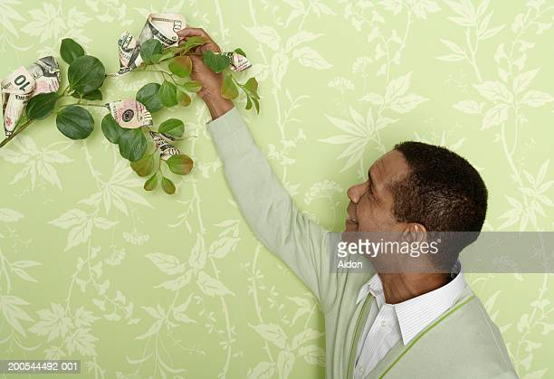 Man picking money off tree branch, indoors
