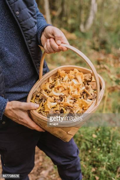 Man plukken in het bos-hanenkam paddestoel en yellowfoot in volle mand
