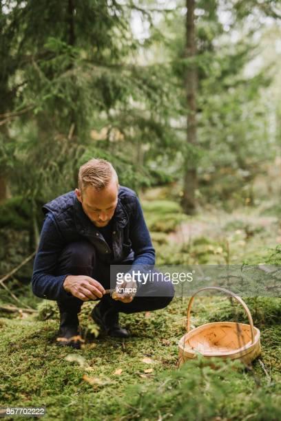 Man plukken van paddestoelen in het bos cantharel en yellowfoot