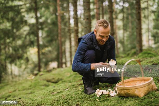 Man picking mushroom in the forest chanterelle and yellowfoot