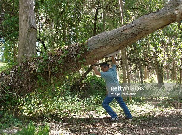 Man picking up tree