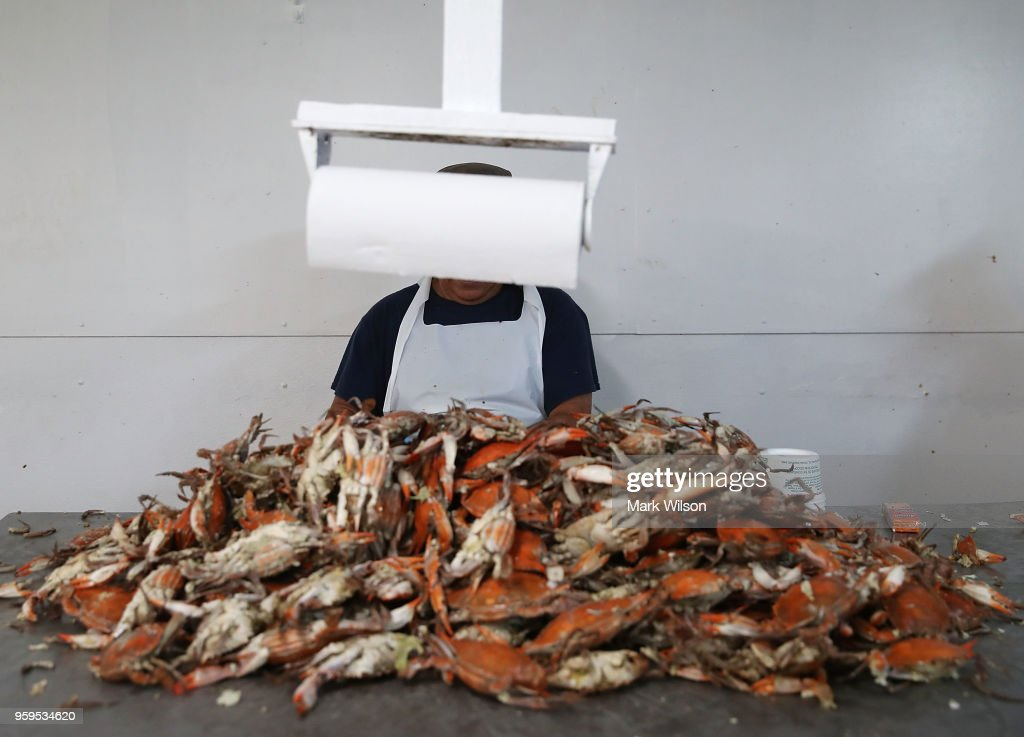 A man picks crabs at the W.T. Ruark Seafood Co., on May 17, 2018 in Hoopers Island, Maryland. Due to a new lottery system this year several seafood companies failed to get temporary H-2B visas for their mostly Mexican workforce that has been coming to the Maryland eastern shore for over two decades to pick the crab meat that is sold in restaurants and stores on the east coast.