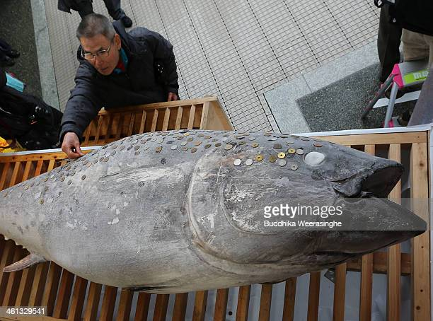 Man places a coin on the offered 2.6 meters long, 260 kilograms weight bluefin tuna at Nishinomiya Shrine, the head shrine of Ebisu sect, a deity of...