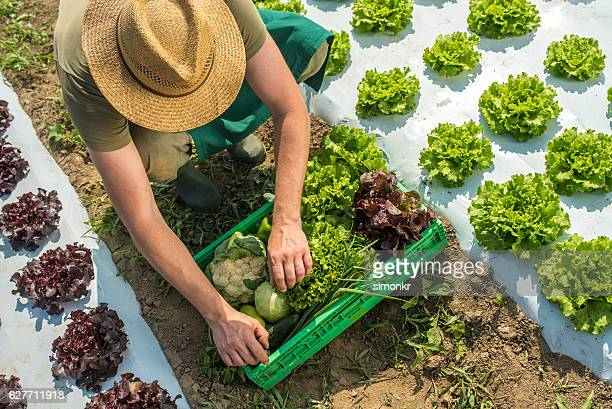 Man placing vegetables in container