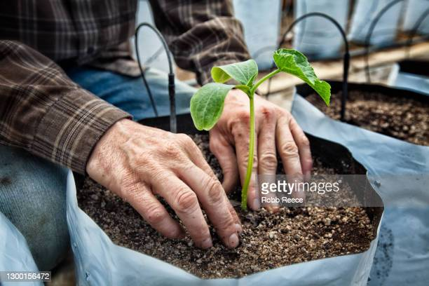 man planting crops on an organic farm - robb reece fotografías e imágenes de stock