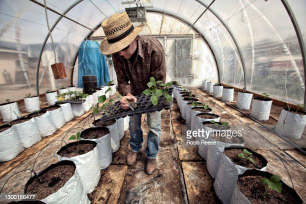 man planting crops on an organic farm - robb reece stockfoto's en -beelden