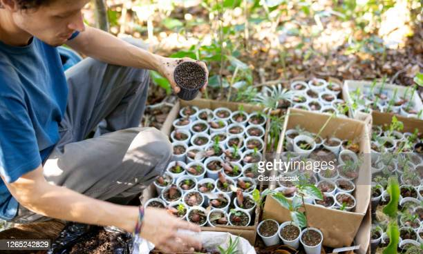 man planting seedlings in a sustainable lifestyle - altruism stock pictures, royalty-free photos & images