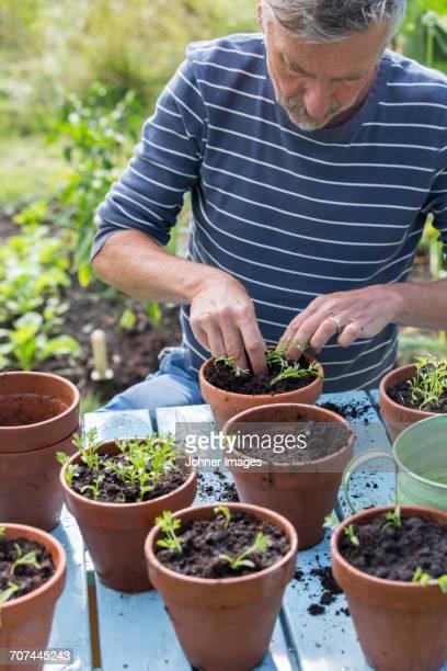 man planting seedlings in pots - エーランド ストックフォトと画像